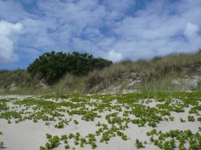 海滩, 叙尔特岛, 北海