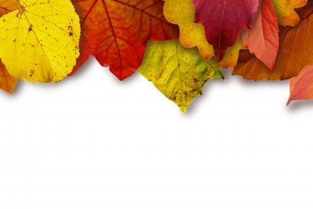 秋天, 颜色, 多彩, 色彩缤纷, 秋天, 叶子, 枫叶