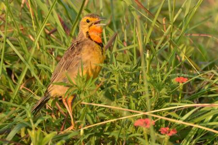 鸟, 南非, rietvlei 自然保护区