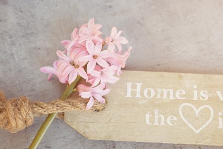 风信子, 花, 春天的花朵, 香美的鲜花, 春天, 关闭, 花
