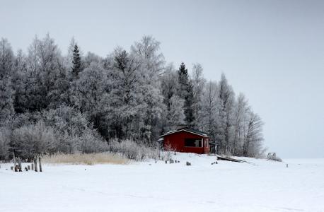 芬兰, 景观, 风景名胜, 森林, 树木, 伍兹, 冬天