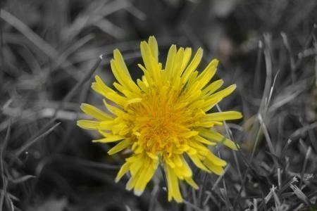 花, 黄色, 黄色的花, 自然, 春天, 花香, 自然
