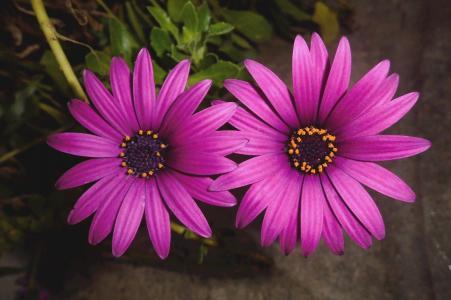 菊花, 花, 绽放, 多彩, 植物, 光明, 妈妈