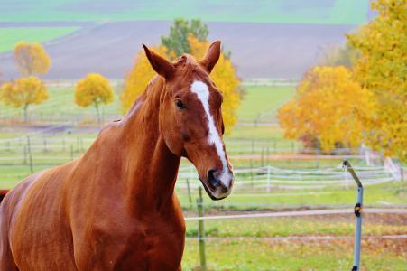 马, 动物, 骑, reiterhof, 棕色, 耦合, 草甸