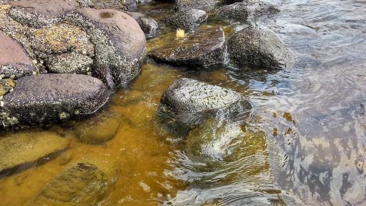 mar, 自然, 石头, 景观, 海滩, 巴西