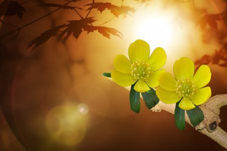 蕨, 狗头人, 花, 花, 植物, 黄色, 关闭