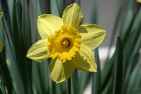 花, 春天, 自然, 黄色