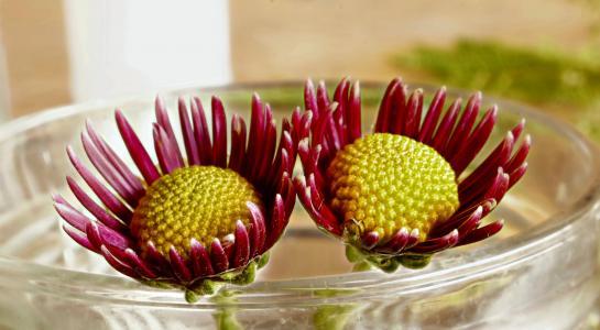 花, 紫色, 妈妈, 自然, 花香, 夏季, 春天