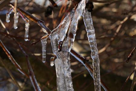 冰, 冬天, 感冒, 冰柱, 弗罗斯特, 树, 分公司