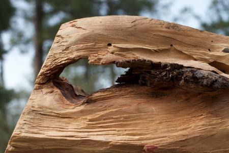 木材, 孔, 风化, 硬木, 木材-材料, 自然, 树