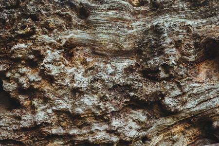 棕色, 岩石, 形成, 树, 木材, 树皮, 纹理