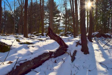 树, 雪, 日出, 森林, 公园, 冬天, 自然