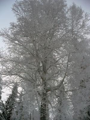 冬天, 树木, 冬天的魔法, 雪, 感冒, 自然, 天气
