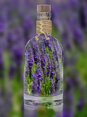 熏衣草, 瓶, 植物, 春天, 紫色, 自然, 字段
