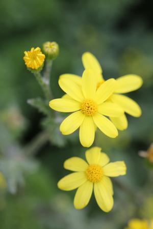 绿色, 黄色, 花, 花园, 植物, 花, 美丽