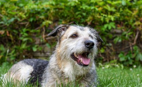 狗, 混的种狗, 狗眼, 狗的鼻子, 动物, 野生动物摄影, 宠物