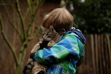 友谊, 儿童, 猫, 在一起, 依偎, 关系, 信任
