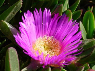 绽放, 粉色, 花, 开花, 植物区系, 植物学, 春天