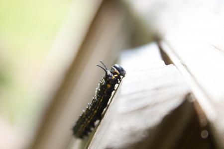 自然, 风光, 昆虫, 宏观, 蠕虫, 特写