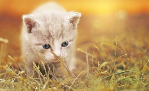 猫, 可爱, 猫咪宝贝, 小猫, 宠物, 动物, 迷人的