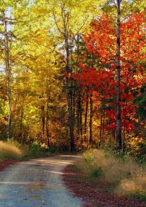 秋天路, 秋天, 叶子, 森林, 自然, 景观, 赛季