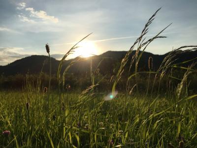 草, 天空, 自然, 云彩, 景观