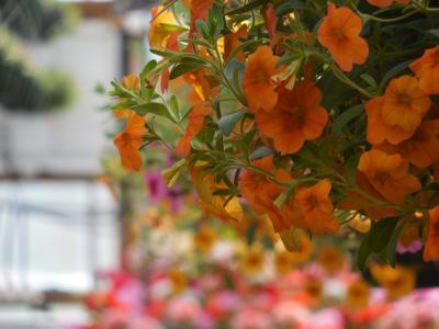 花, 温室, 花园, 植物, 绿色, 园艺, 园艺