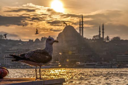 海鸥, 海洋, 非洲工业部长会议, 土耳其, 和平, 海滩, 日落