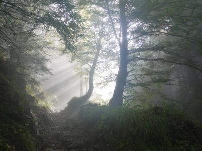 上升, 早上, 雾, 新光, 神秘, 在清晨, 心情