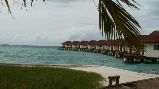 马尔代夫, 北马累环礁, 海, 棕榈树, 沙子, 白色, 蓝色