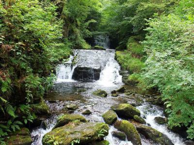 瀑布, 河, 流, 森林, 岩石, 自然