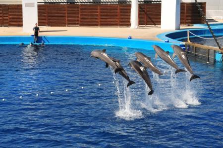 海豚, 显示, 水族馆, 瓦伦西亚, 跳转