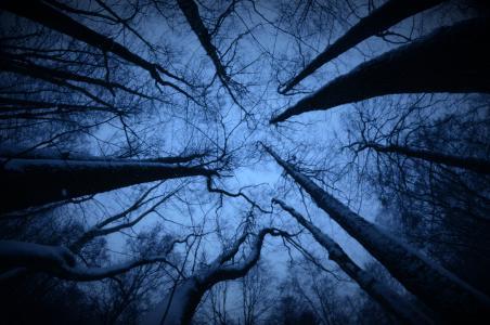 森林, 木材, 分支机构, 严峻, 黑暗, 树, 自然