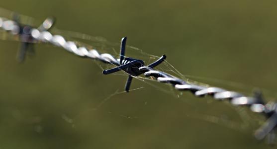带刺的铁丝网, 击剑, 警告, 金属, 电线, 被囚禁, 分界