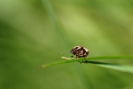 宏观, 绿色, 昆虫, 自然, 草药