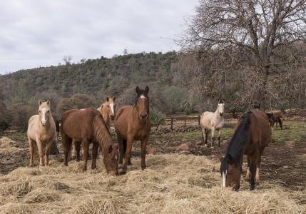 马, 野生, 圣所, 牧场, 动物, 牲畜, 户外