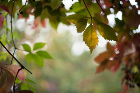 秋天, 自然, 森林, 叶, 树, 户外, 白天