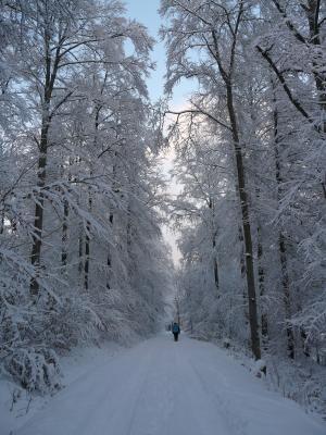 冬天, 寒冷, 冬日的远行, 徒步旅行, 雪, 感冒, 冰冷
