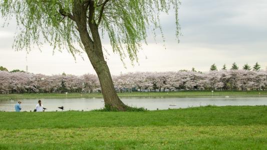 柳树, 湖, 春天, 绿草, 风景, 视图, 公园