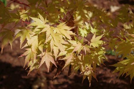 秋天, 叶子, 黄金, 秋天, 赛季, 叶子, 多彩