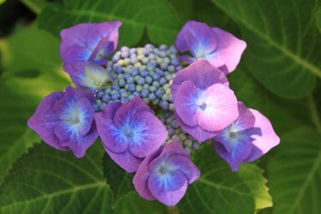 紫色, 花, 紫色的小花, 植物, 自然, 关闭, 花紫色