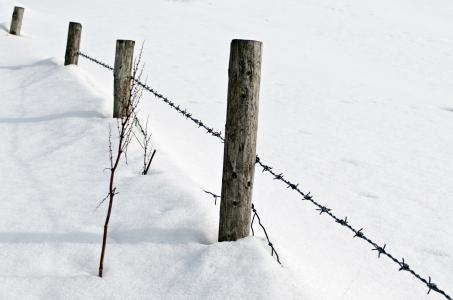 雪, 降雪量, 白色, 感冒, 四季, 背景, 12 月