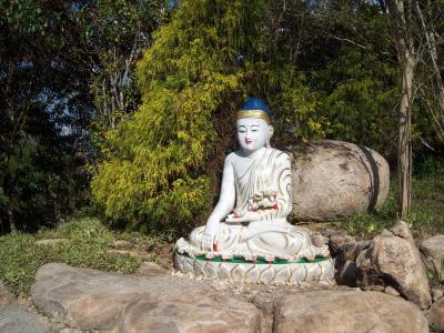 佛, 中国佛, 雕塑, 佛教寺庙, 刺豚鼠, 圣保罗, 巴西