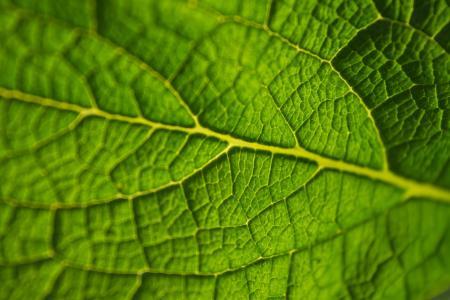 叶, 绿色, 宏观, 植物, 自然, 环境, 生态