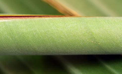 香蕉叶, 关闭, 绿色, 植物, 滚, 轧制板, 卷香蕉叶