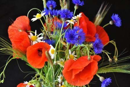 罂粟, 罂粟花, 矢车菊, 红罂粟, klatschmohn, 自然, 红色