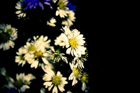 花, 雏菊, 花, 植物, 春天, 花园, 自然