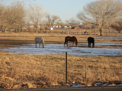 马, 喂养, 动物