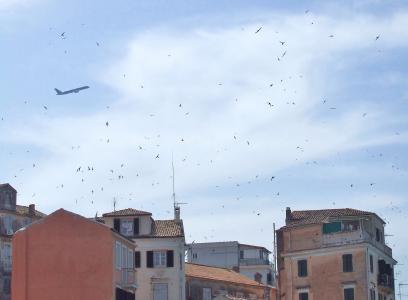 科孚岛, 小镇, 天际线, 旧城, 燕子, 鸟类, 飞行