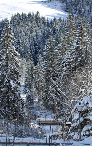 雪景, 白雪皑皑, 冬天, 太阳, 火花, 雪, 树木